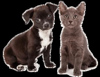Bilde av Produkter for dyr