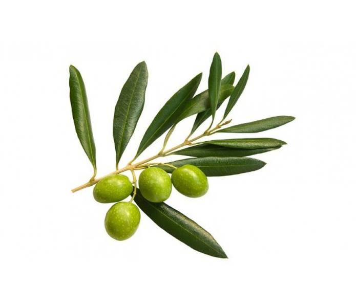 East Park Olivenbladekstrakt til barn 120 mg 60 kapsler