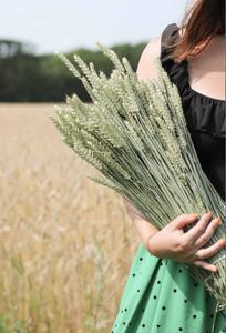 Bilde av Triticum hvete natur Lykkeblomster