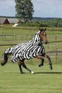 Bilde av Bucas Buzz-Off Zebra