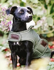 Bilde av Kentucky Dog Rug Waterproof