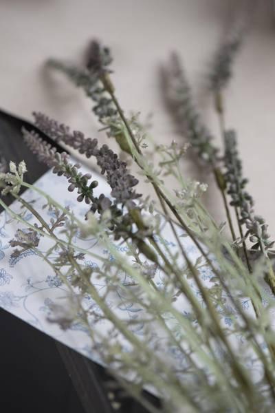 Stilk med blomst grålige nyanser