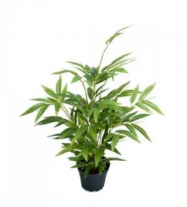 Bilde av Bambu 45 cm