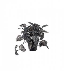Bilde av Sølvranke 25cm sort/sølv