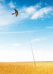 Bilde av Fuglekite som holder uønskede fugler vekk. 5m