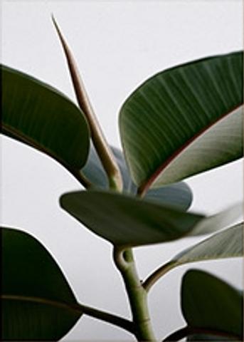 Bilde av Green Home 02