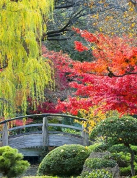 Bilde av Japansk Hage  Skrivebok