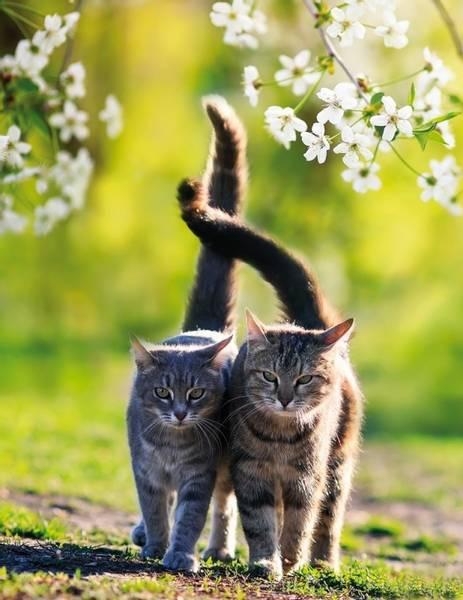 Bilde av 2 Katter Skrivebok