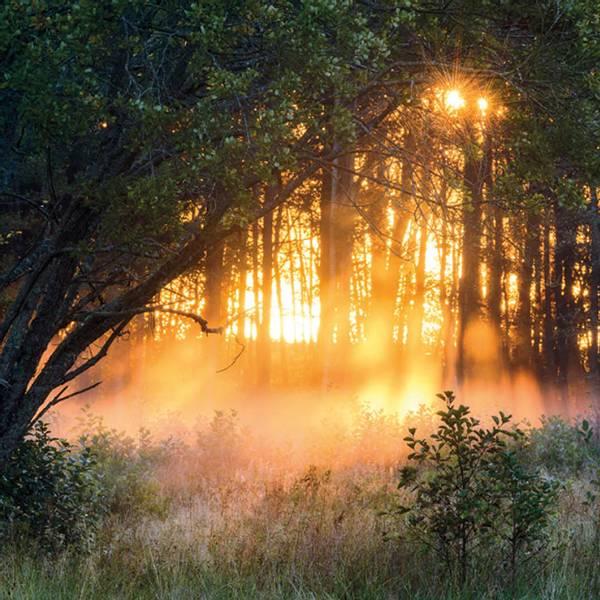 Bilde av Postkort Solnedgang