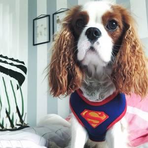 Bilde av Supermann Step-in hundesele til hund