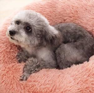 Bilde av Gammelrosa rund hund- og katteseng 2 str