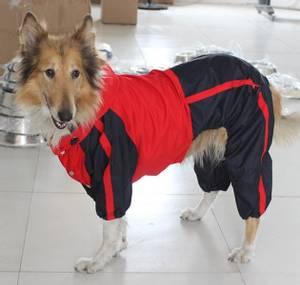 Bilde av God regndress for hund - parkdress