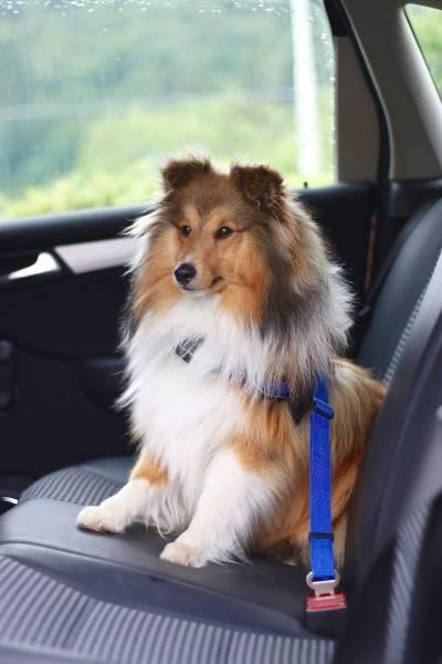 Bilbelte - feste for hund