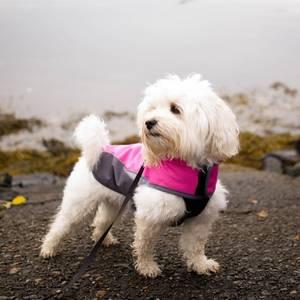 Bilde av Stilig hundedekken med fleece (XL-2XL)