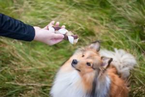 Bilde av Stor flettet hundetygg dentafun