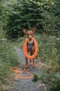 Bilde av Oransj sporline / Langline til hund 6mm