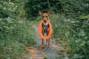 Bilde av Oransj sporline / Langline til hund 4mm