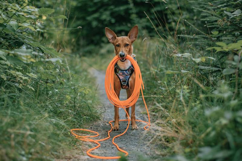 Oransj sporline / Langline til hund 4mm