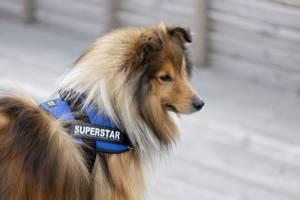 Bilde av Superstar: Julius K-9 merke 2pk