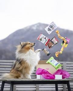 Bilde av Poteklubben Forundringspakke Hund