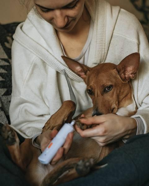 Elektrisk negltrimmer for hund