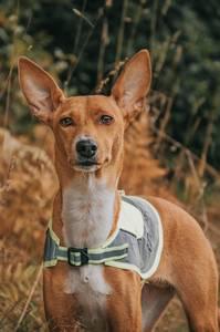 Bilde av Xtreme Refleksvest for hund