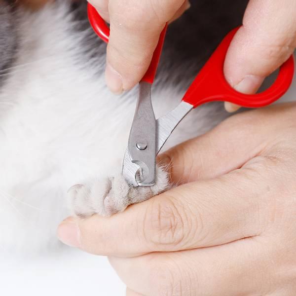 Klosaks for katt og liten hund