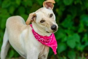 Bilde av Rosa bandana - hundeskjerf paisley