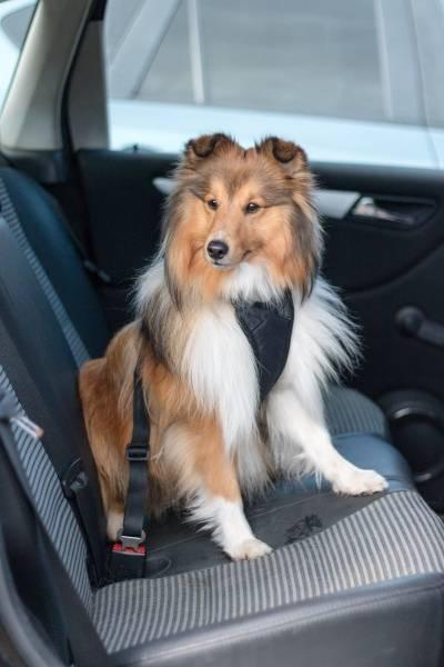 Bilsele og sikkerhetsbelte for hund i bil