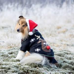 Bilde av Sort julegenser til hund med reinsdyr
