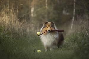 Bilde av Tennisball-kaster for hund 46cm