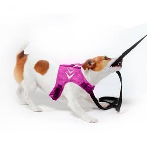 Bilde av Lilla solid hundesele med refleks