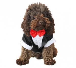 Bilde av Hundesmoking - flere farger