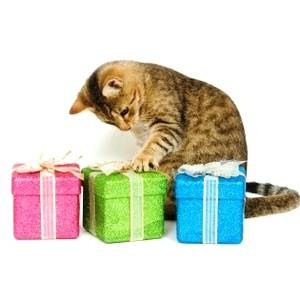 Bilde av Forundringspakke til katt