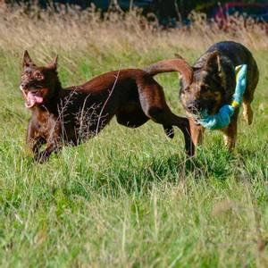 Bilde av Oransj stretchy hundeleke med ball