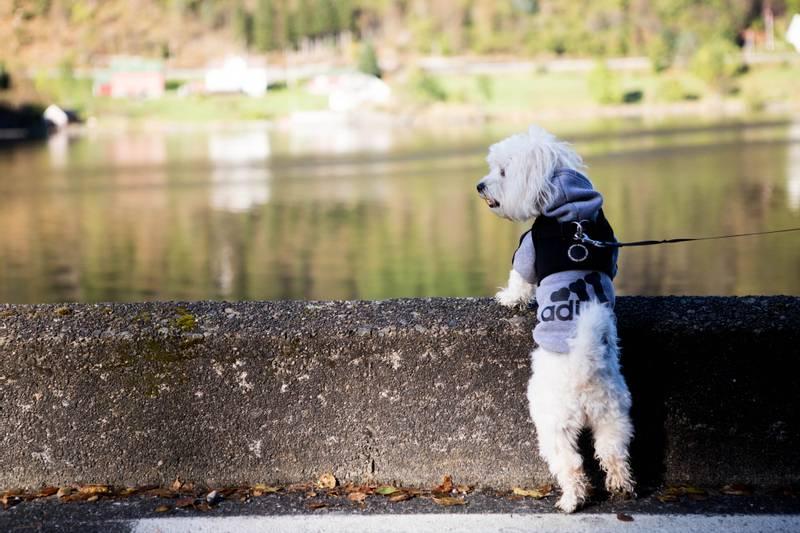 Hundegenser Adidog for liten og stor hund