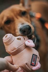 Bilde av Kong Phatz gris hundeleke S