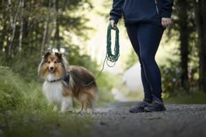 Bilde av 15m Sort nylon sporline / Langline til hund