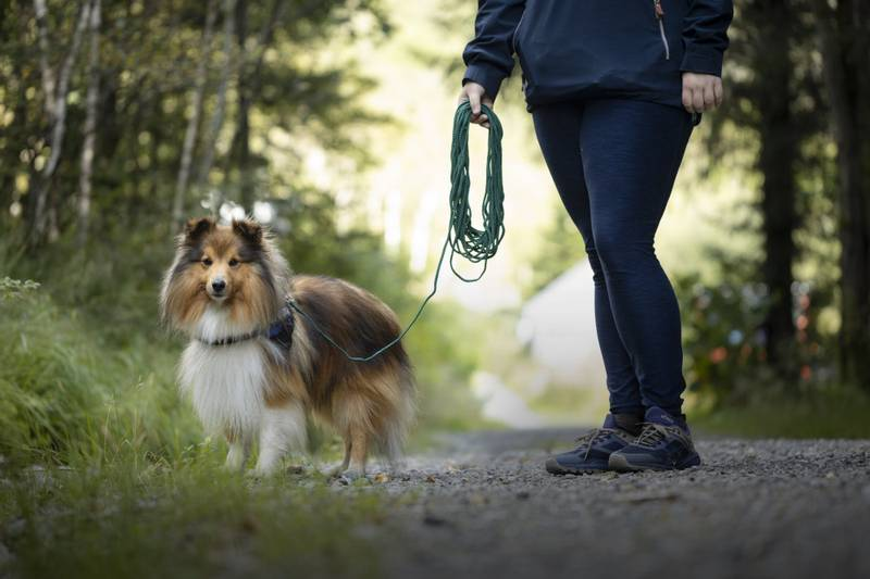 15m Sort nylon sporline / Langline til hund