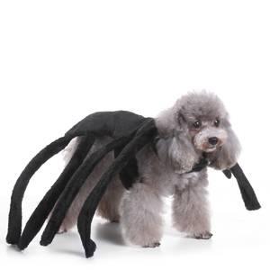 Bilde av Edderkopp kostyme til hund