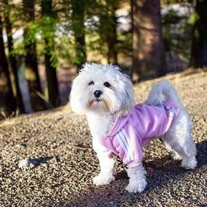 Bilde av Hundegenser Adidog for liten og stor hund
