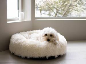 Bilde av Hvit rund luksus hunde- og katteseng, 2 str
