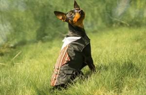 Bilde av Bunad til hund - han