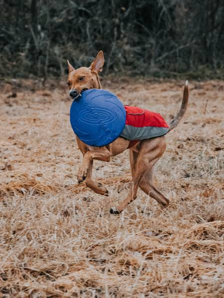 Liten myk frisbee til hund i gummi 15cm