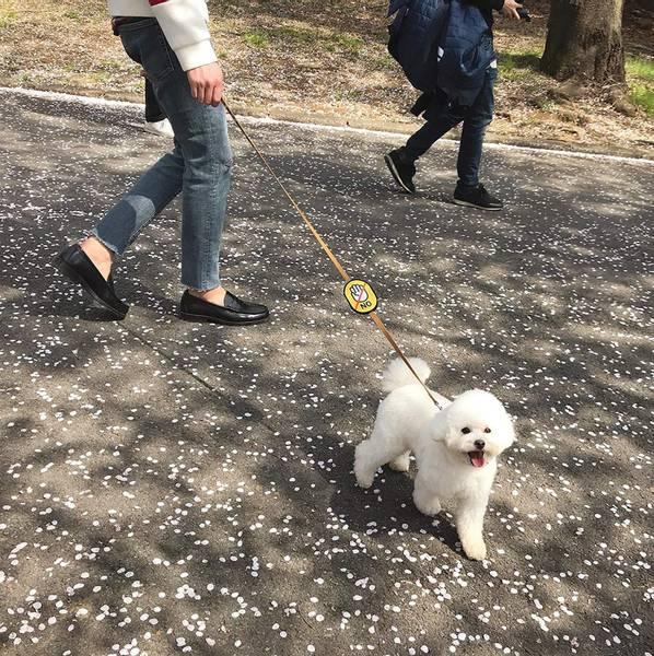 """Gult """"ikke ta bilde av hunden"""" merke"""