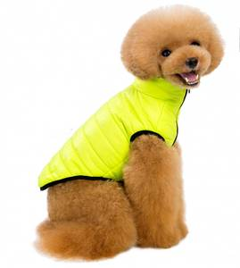 Bilde av Fresh gul hundejakke