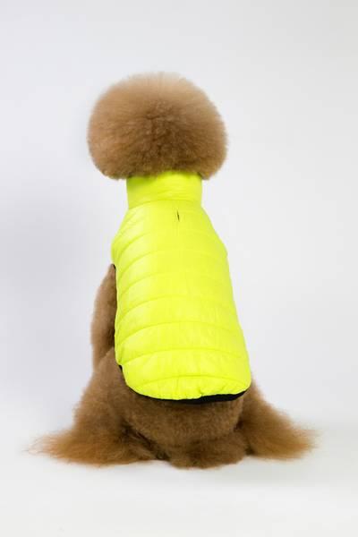 Fresh gul hundejakke