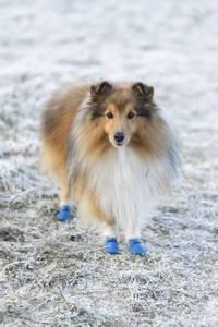 Bilde av Vanntette ballongsko til hund