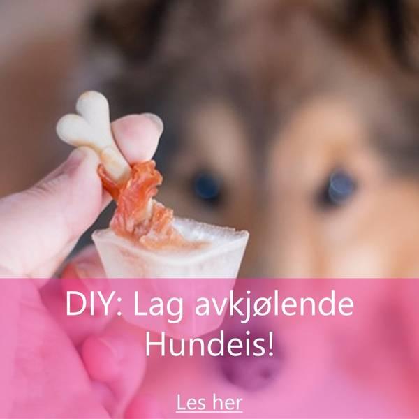 Lag din egen avkjølende hundeis!