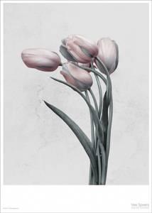 Bilde av Vee Speer Botanica Tulipa